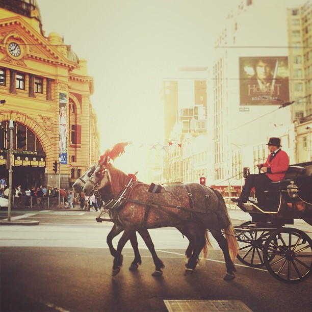 Mark Lobo Photography - Melbourne - Horse and Carriage