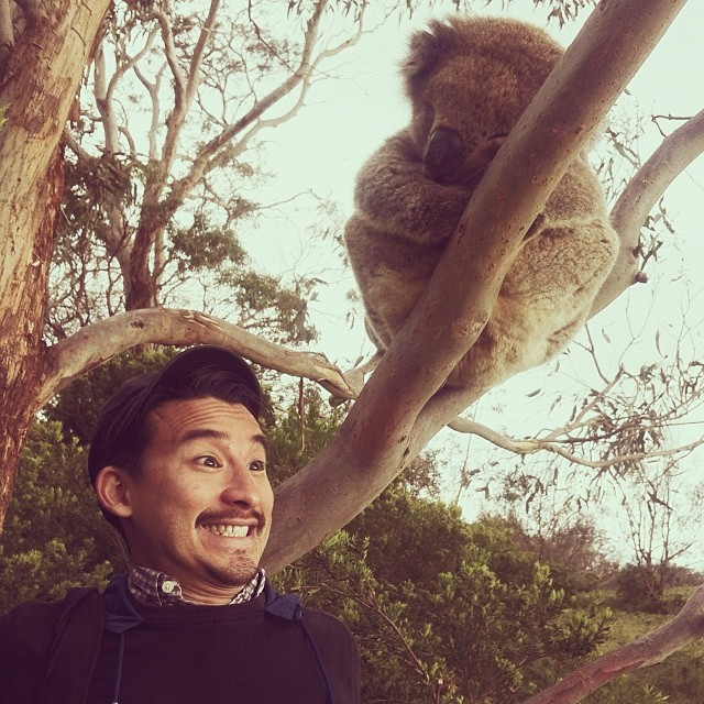 Excited Tourist and a Koala - Mark Lobo