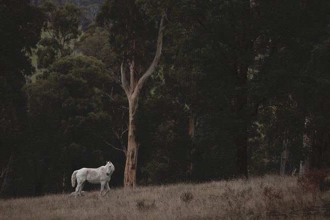 White Horse - Do Lectures Australia - Mark Lobo Photography