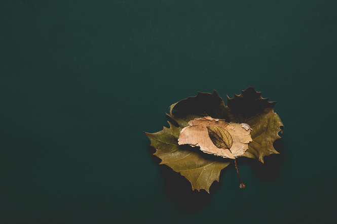 Stacked Leaves - Mark Lobo Photography