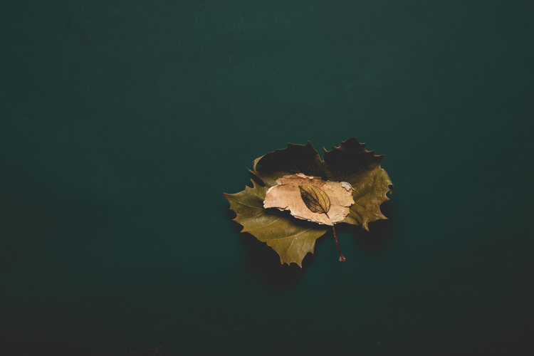Leaf Photography Print from The Block - Mark Lobo