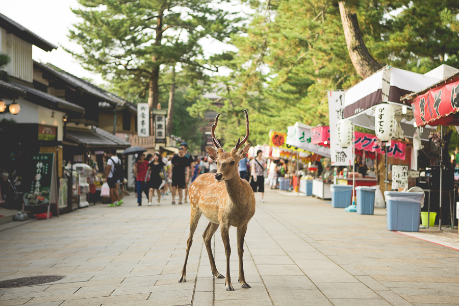 The Deer Of Nara - Mark Lobo