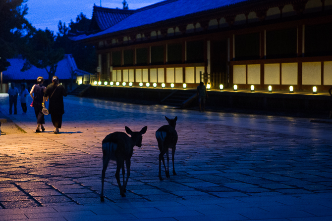 Nara Deer - Japan - Mark Lobo